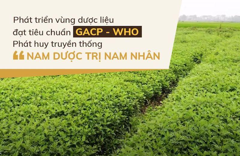 Vườn dược liệu đạt tiêu chuẩn GACP - WHO của Đỗ Minh Đường