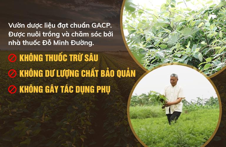 Cam kết sử dụng 100% thảo dược tự nhiên, đạt tiêu chuẩn GACP-WHO